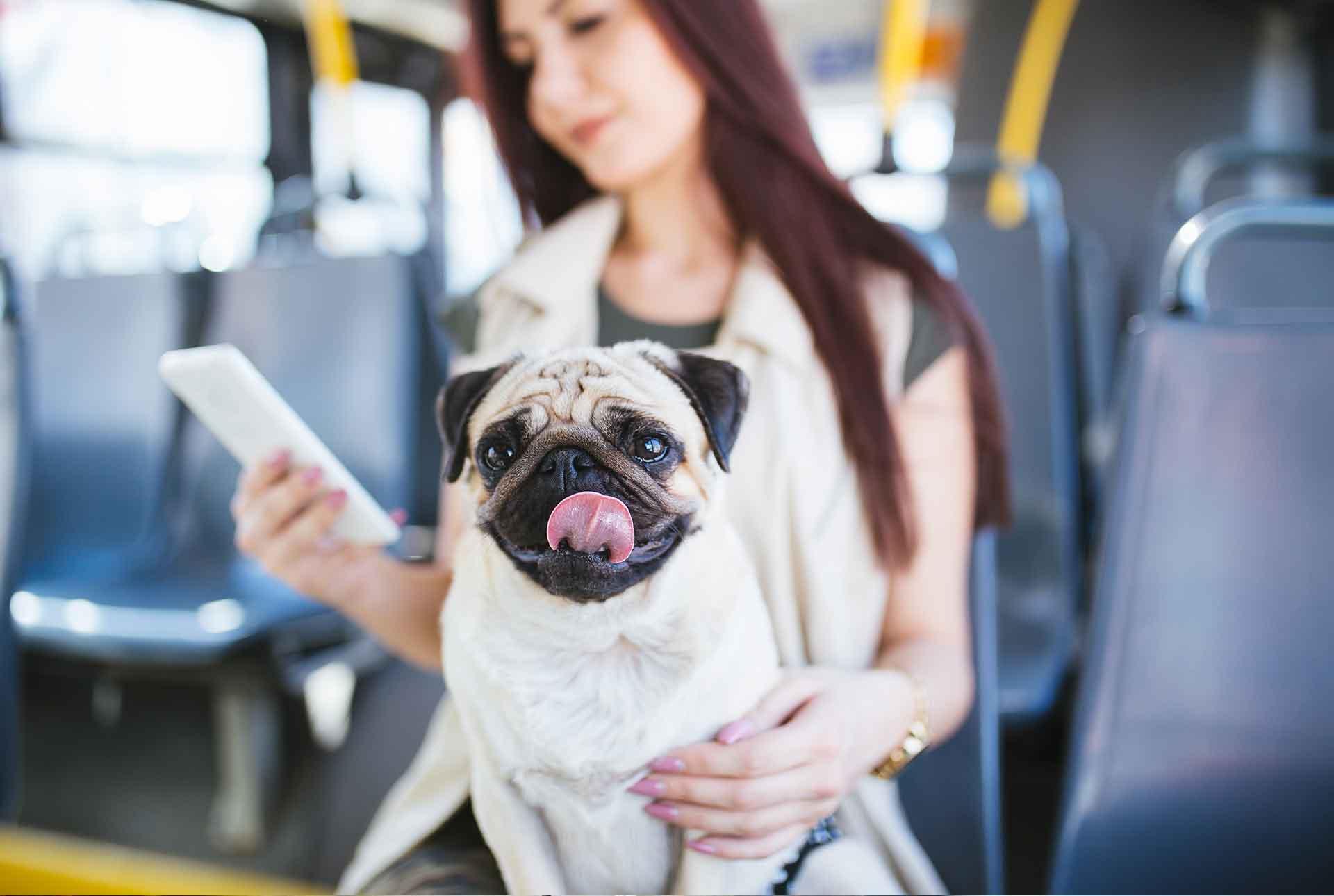 Mascota en autobus