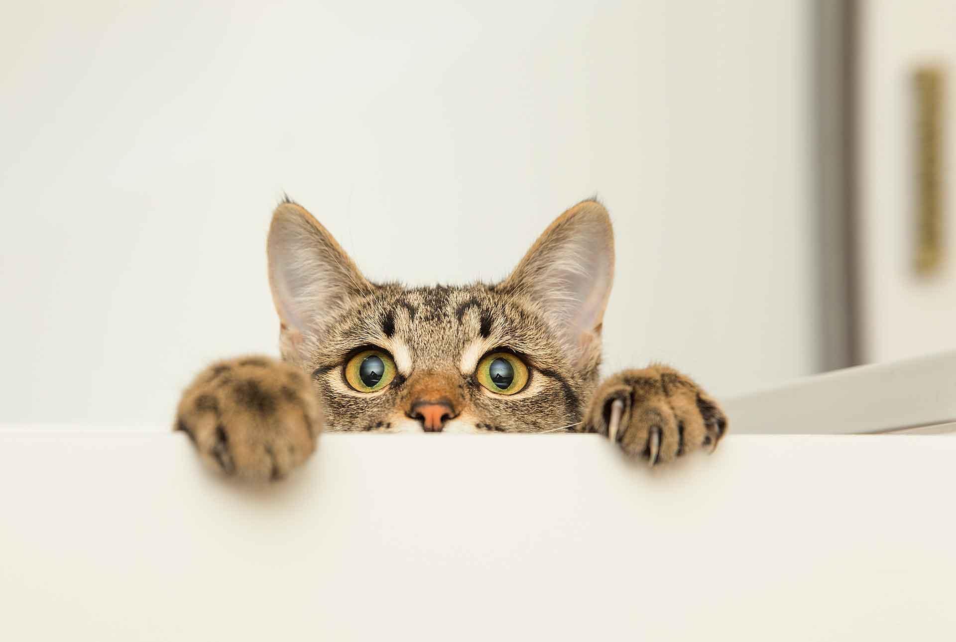 Gato asomando