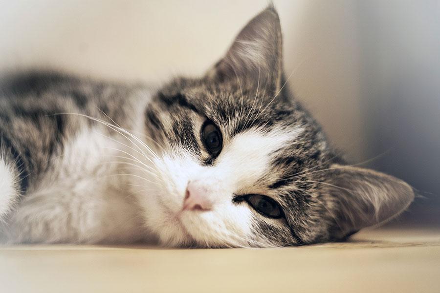 Foto a la altura del gato