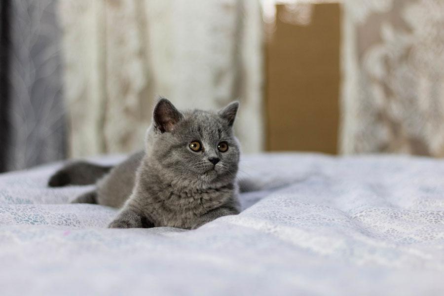 Foto de gato con fondo bonito
