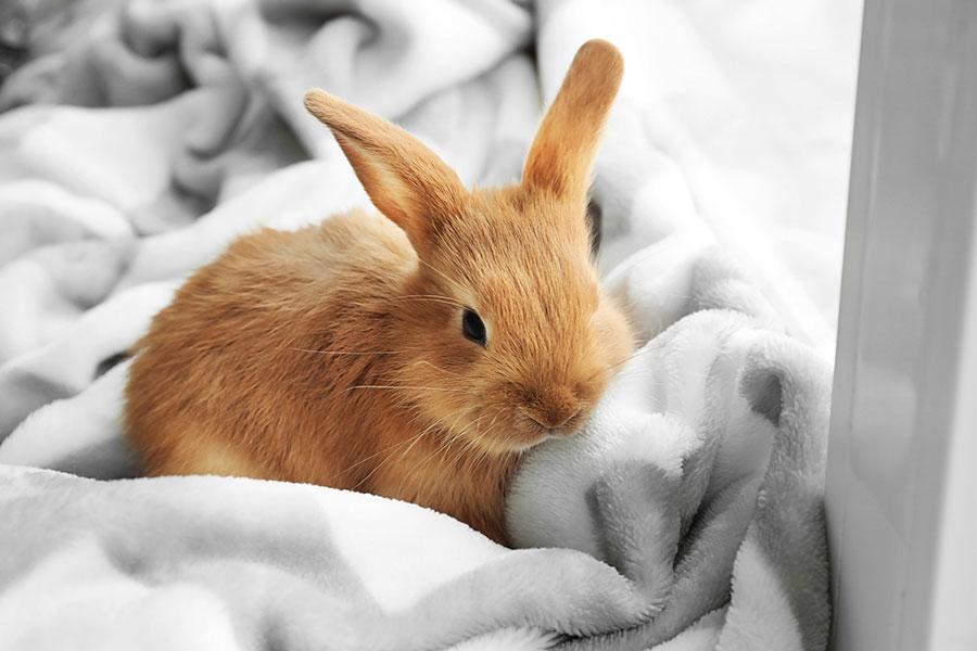 Conejo debajo de una ventana