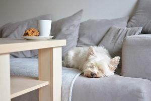 Perrito en el sofá