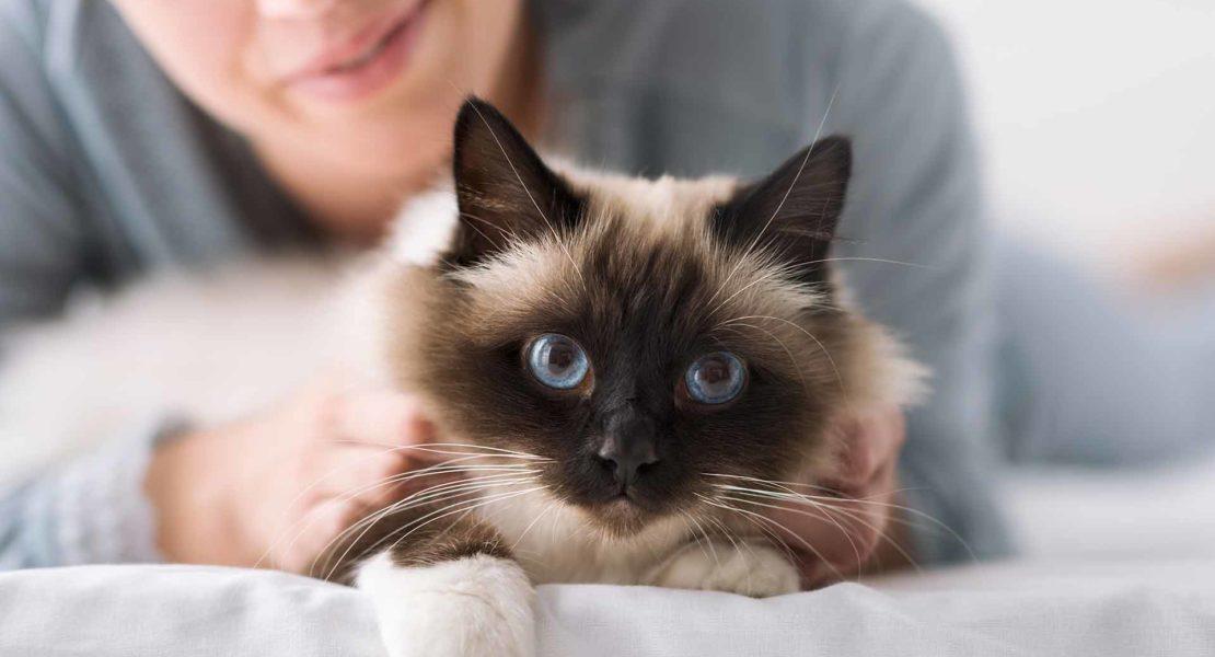 Imagen de gato con dueño