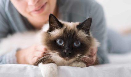 gato acariciado por mujer