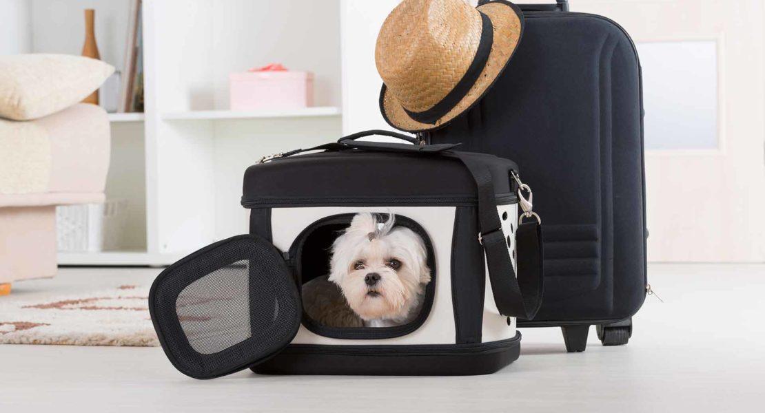 Mascota en cesta de viaje