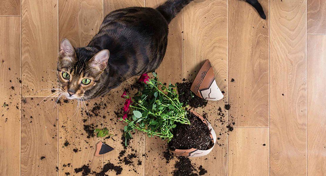 Gato plantas tóxicas
