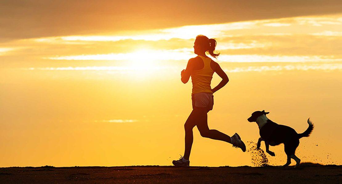 Perro corriendo con dueño calor