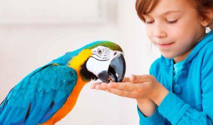 Niña con ave