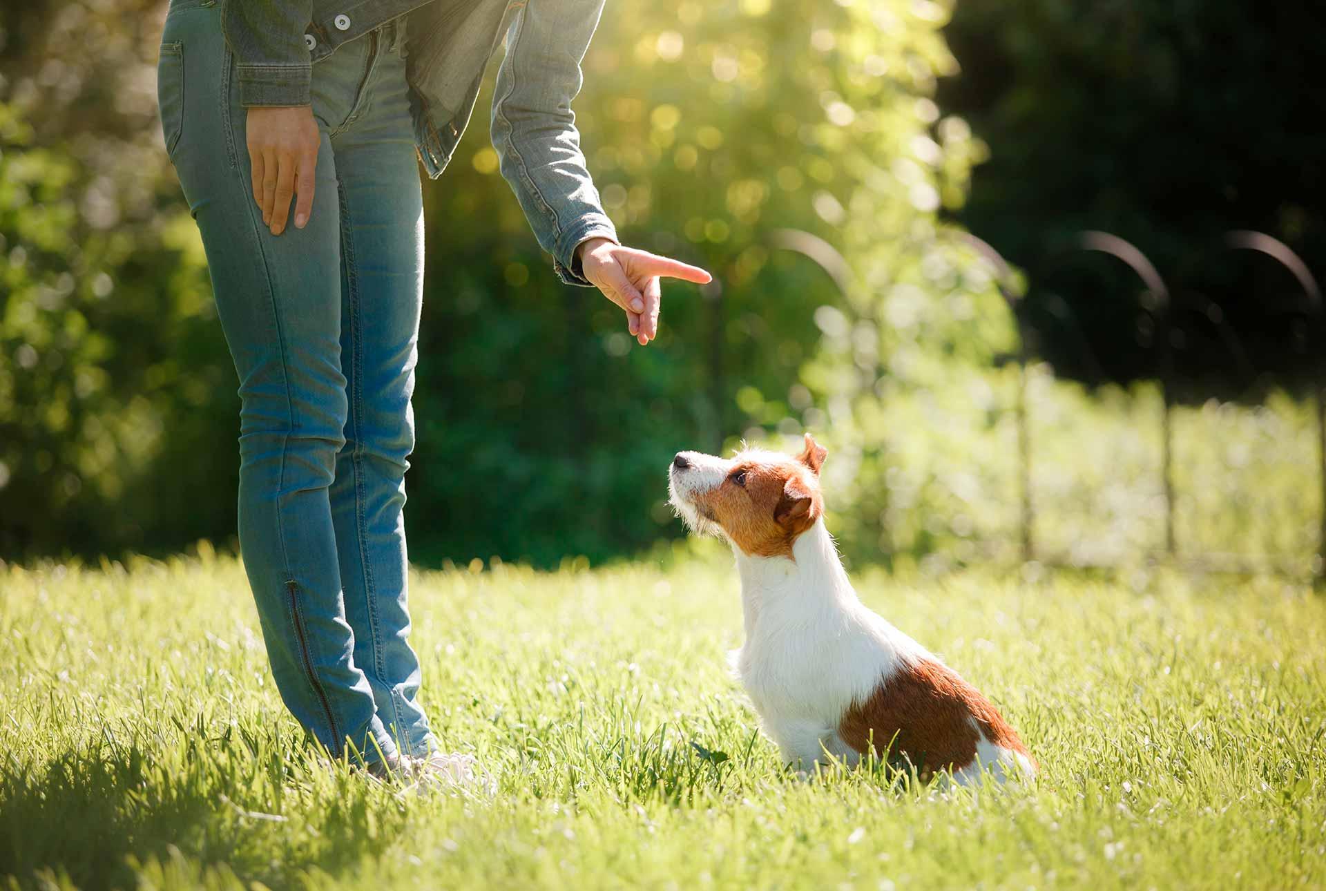 mujer dando una orden a un perro