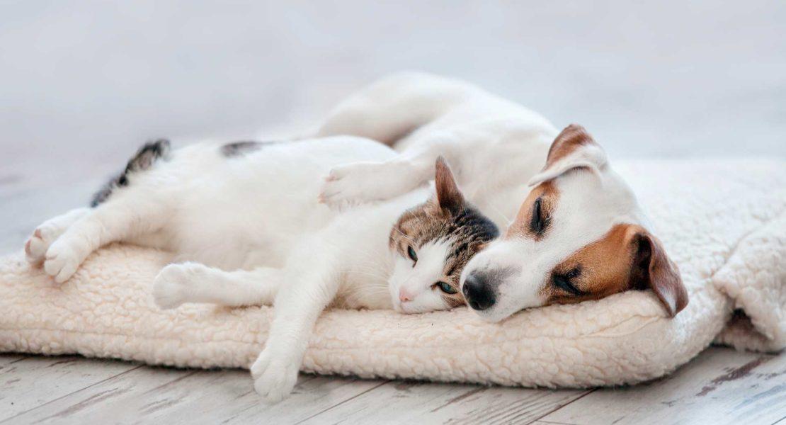 perro tumbado con un gato