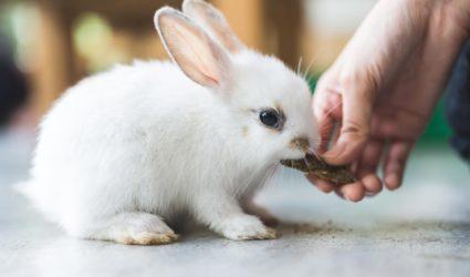 conejo siendo alimentado