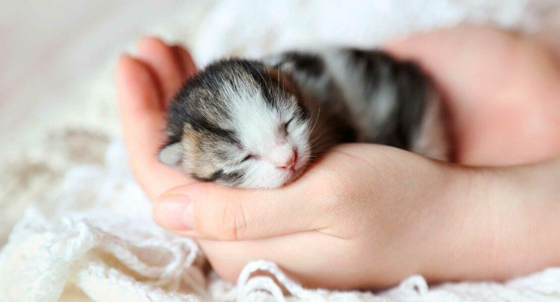 Gato neonato