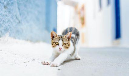 Gato estirándose en la calle