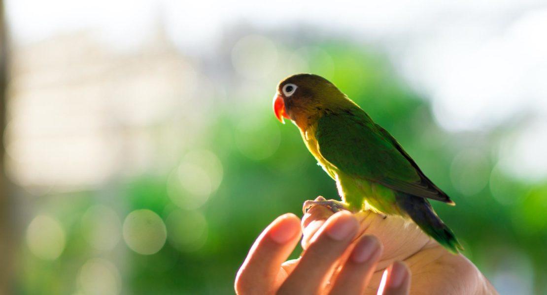 Pájaro en una mano