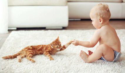Bebe jugando con un gatito