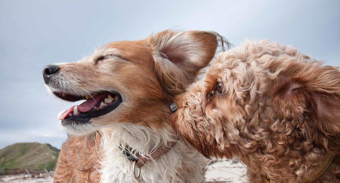 Perritos en actitud cariñosa