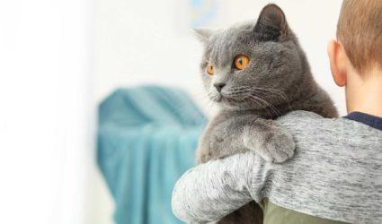Niño abrazando a gato