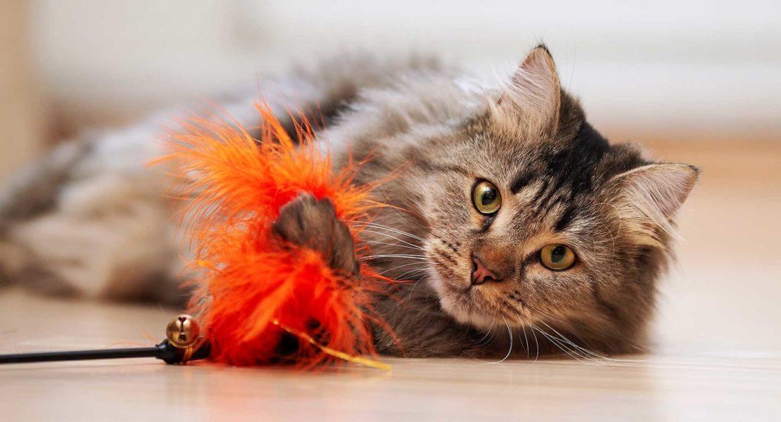 Gato jugando con un plumero