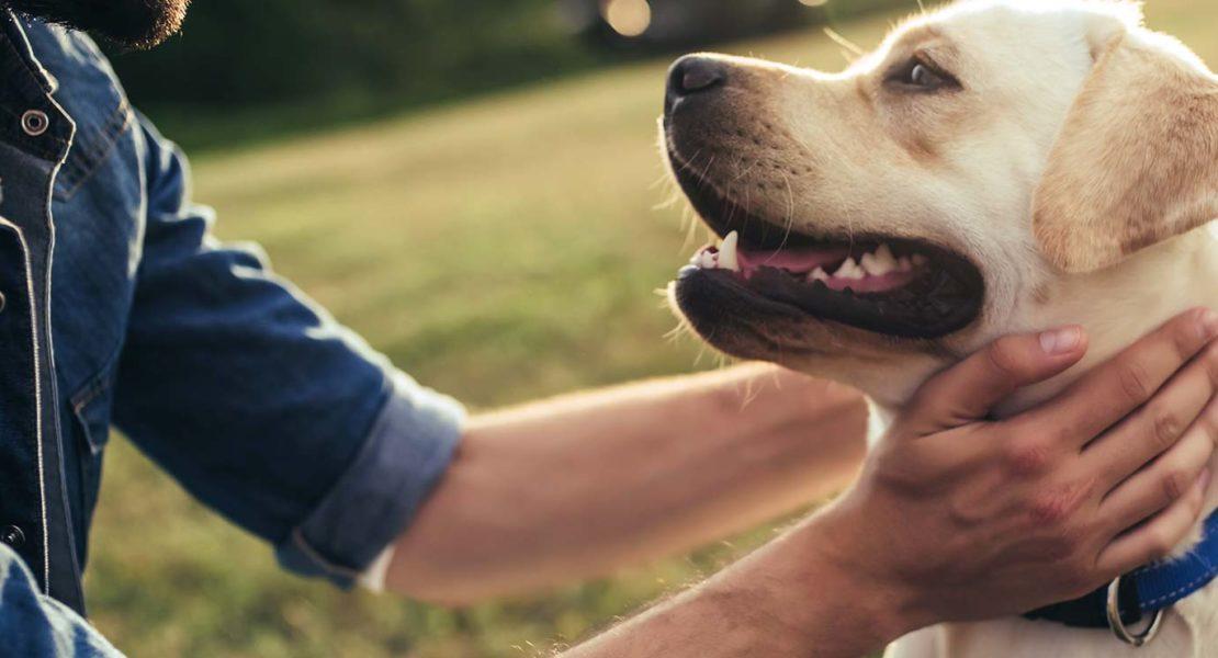 Imagen de perro con amo