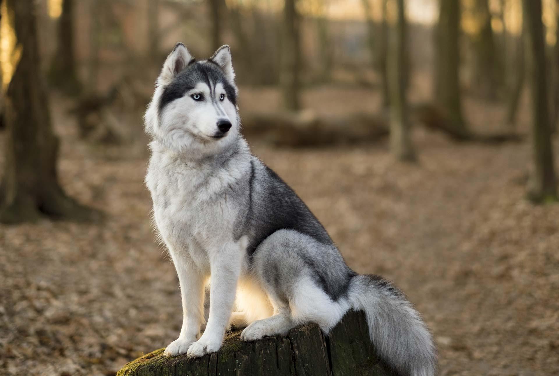 Lobo en lo alto de una roca