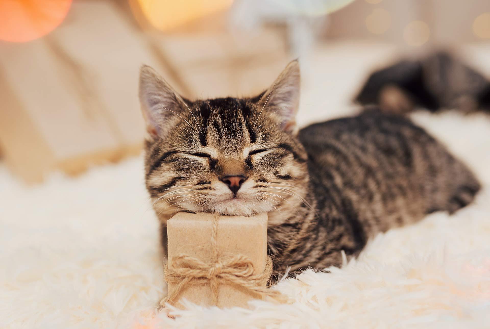 Gato apoyado en un regalito
