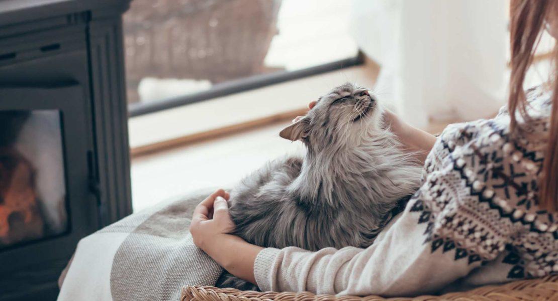 Gato sentado encima de una mujer