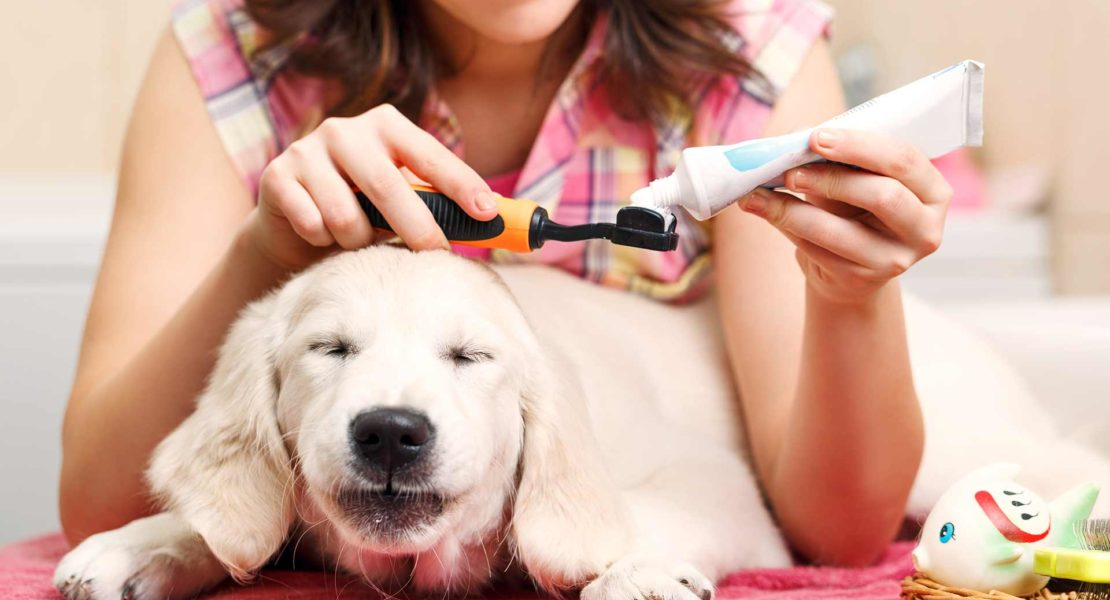 Perro preparado para limpieza bucal