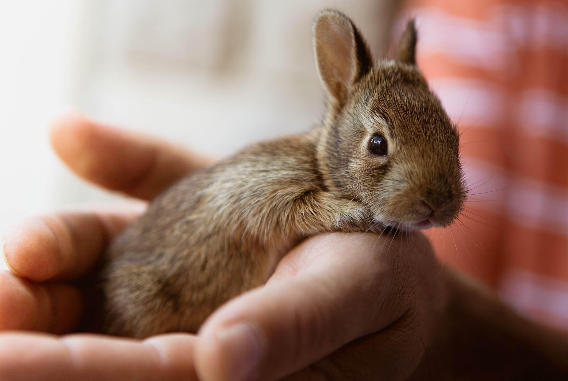 Conejo en una mano