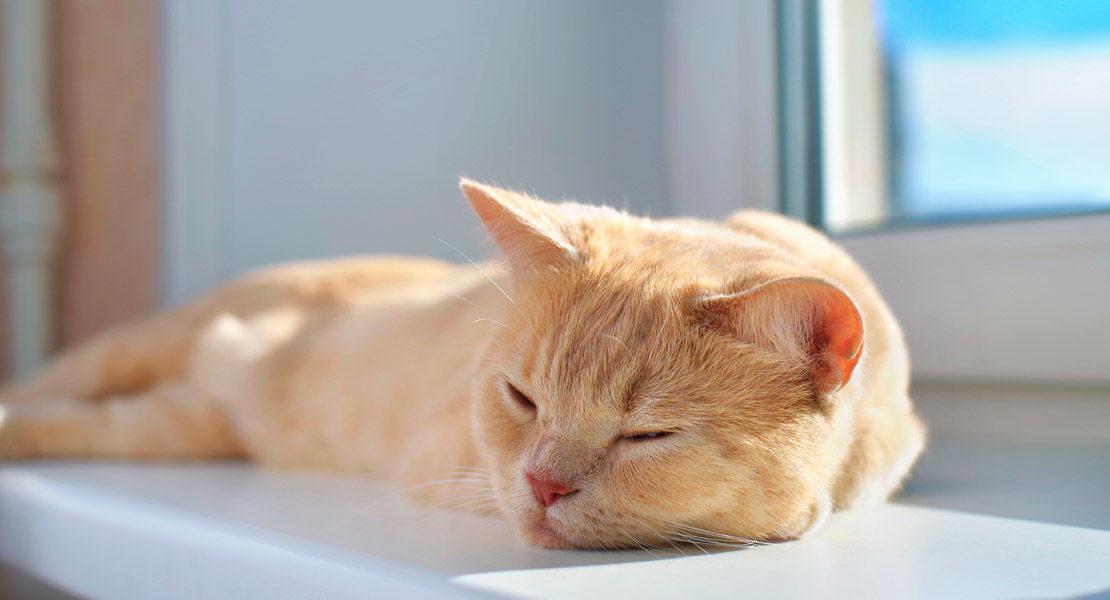 Gato al sol durmiendo